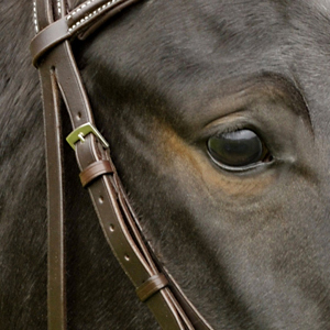 Philippe Fontaine Bridle in matching tone